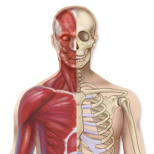 Bones, Joints and Muscles - Diseases, Conditions, and